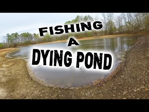 Pond FISH Dying????