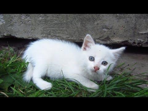 New white kitten in the family of tortoiseshell cat
