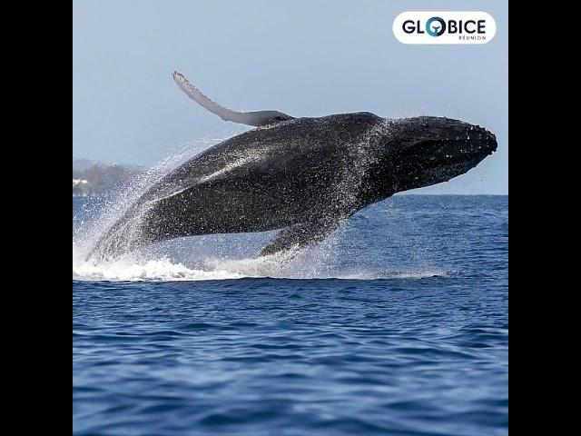 Bilan Saison Baleines 2020