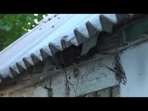 лазоревки наловили гусениц для своих птенцов