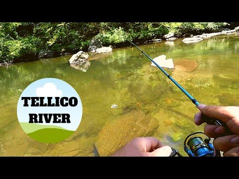 Fishing Tellico River And Hatchery Viewing