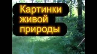 Картинки живой природы(Картинки и звуки живой природы в июньском лесу под неизвестную музыку., 2014-06-20T13:31:16.000Z)
