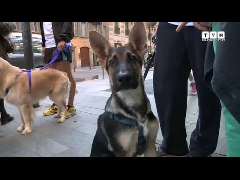 Royal Canin World - A Milano il temporary dedicato ai pet