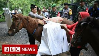 Horses take ballot boxes to Indonesian villages - BBC News