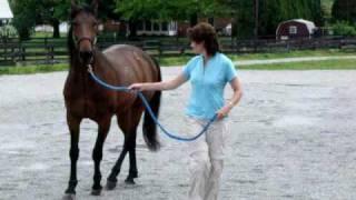 Sinker Founderd Horse in Leola, Pennsylvania