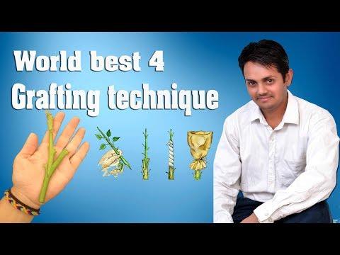 World Best Grafting Technique Hindi