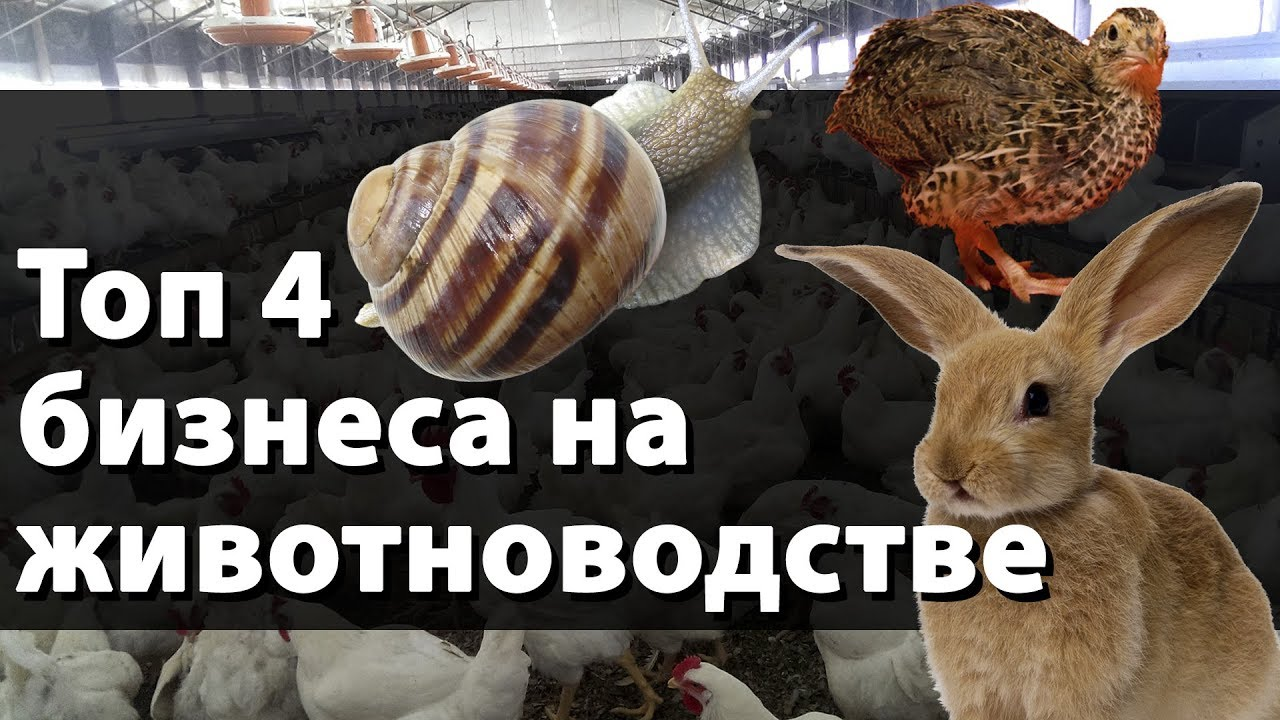 Идеи бизнеса в животноводстве заработать идея бизнеса