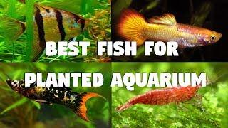 Best Fish for Planted Aquarium