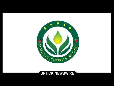 Ceo Raymond Lai Of Maple Leaf Green World Inc Otcqb Mgwff Youtube