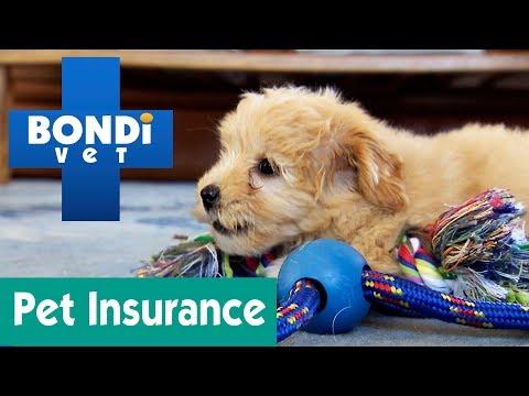 Should You Buy Pet Insurance? | Ask Bondi Vet