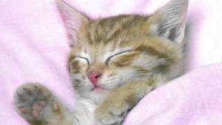 Metric - Lost Kitten [HQ]