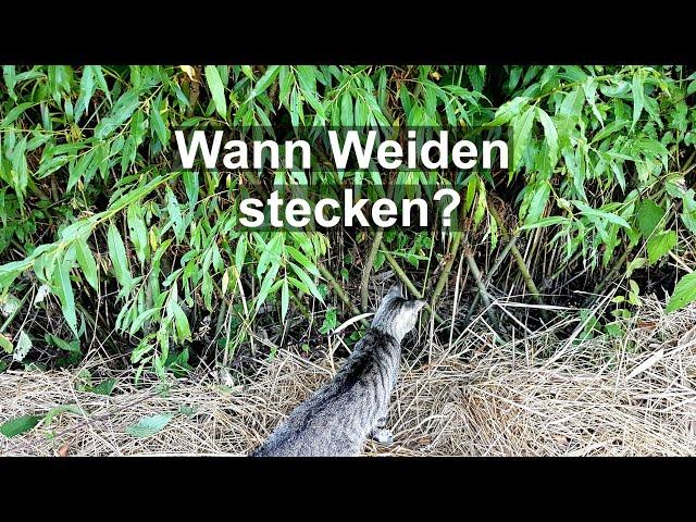 Wann kann man Weiden stecken / Weidenstecklinge pflanzen Q&A