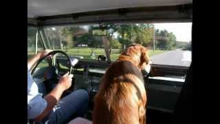 "A Short Drive With Our Dog ""molly"" In My 1960 Land Rover 88""...."