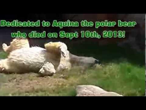 NC Zoo Music Video BG praise