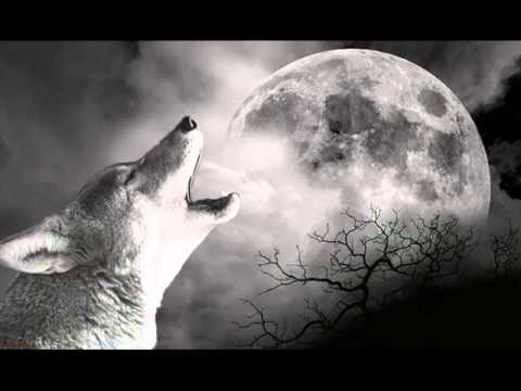 Wolf Howling Youtube