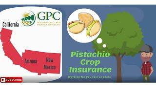 Pistachio Crop Insurance Explained | Golden Pacific Crop Insurance