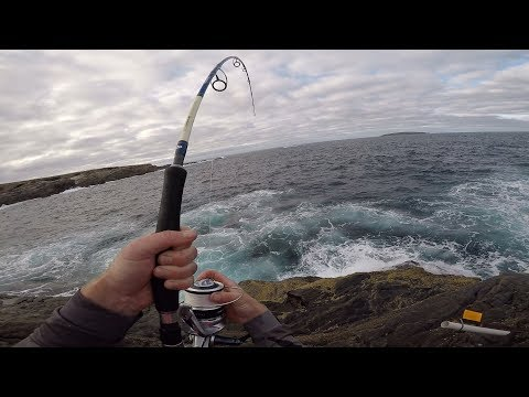 Rock Fishing Australia For Monster Blue Groper