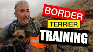 TRAINING my BORDER TERRIER PUPPY 2STAY
