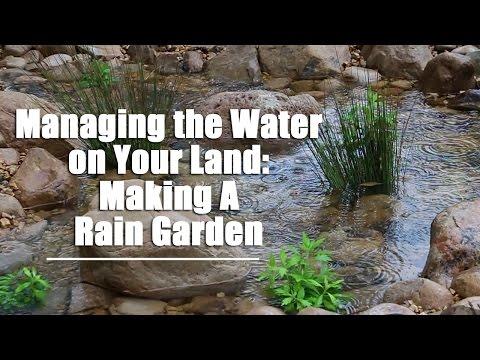 Create a rain garden - large/community area