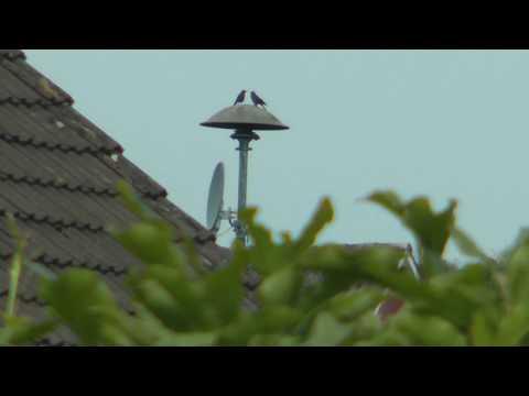 Sirenen im Landkreis Leer TESTLAUF Weener/Ems :Katastrophenalarm/Fliegeralarm & Entwarnung