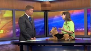 Dog Sitting Pet Daycare Service Franchisebethpage Long Island New York | (718) 347-7387