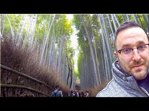 BAMBOO FOREST: KYOTO, JAPAN [Beautiful]