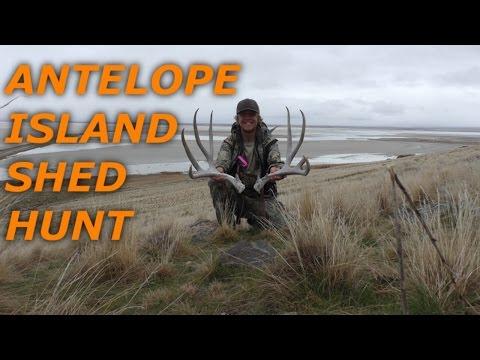 Antelope Island Shed Hunt