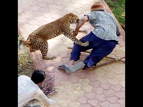 hayvan saldırıları