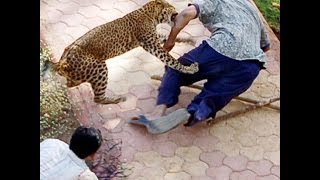 Hayvan Saldırıları Derleme - Animal Attacks Compil