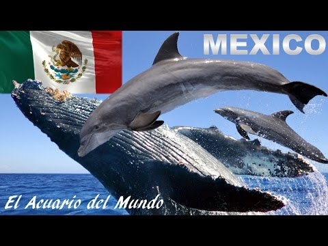 Gran Golfo de California, México: El Acuario Natural Más Grande del Mundo