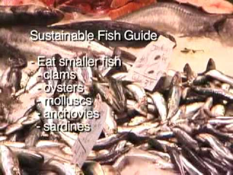 Sustainable Fish Guide: How To Eat To Save The World's Oceans