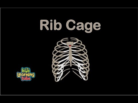 Rib Cage Song/The Human Body for Kids/Learn about the Human Body for Children