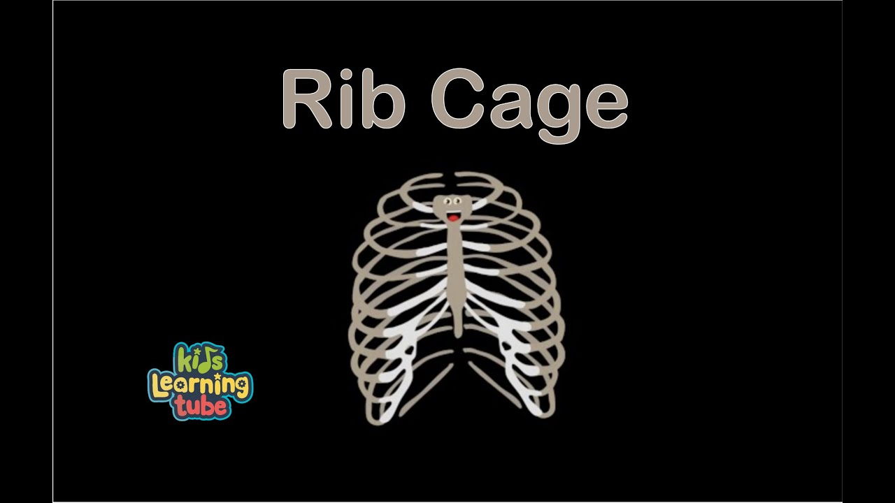rib cage anatomy song for kids anatomy for kids youtube. Black Bedroom Furniture Sets. Home Design Ideas