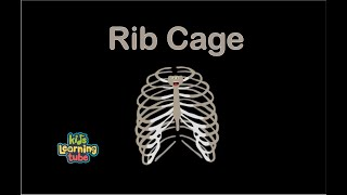The Human Body for Kids/Learn about the Human Body for Children/Rib Cage Song