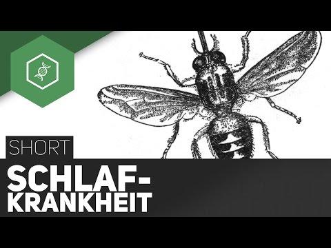Schlafkrankheit - Tsetsefliege bald in Deutschland?! - TheSimpleShort