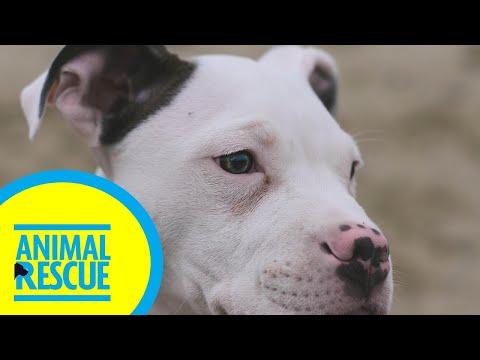Animal Rescue - Season 2, Episode 18