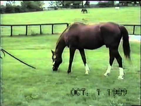 Secretariat's last footage.