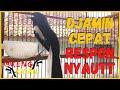 Suara Pancingan Poci Kacer Gacor Ngeplong Nembak Isian Mewah Bagus Buat Kacer Yang Macet Bunyi  Mp3 - Mp4 Download