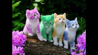 Funny Cats - Cutest cats doing funny things