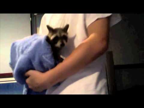 Sureflap Vs Cat Mate