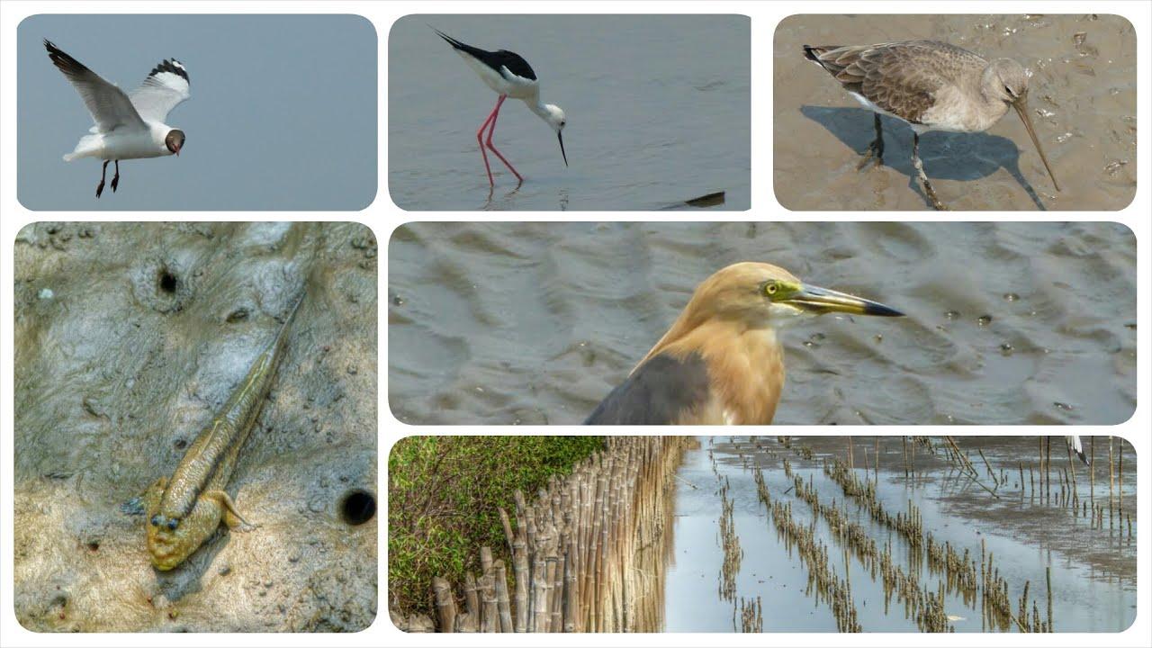Bang Pu Nature Preserve