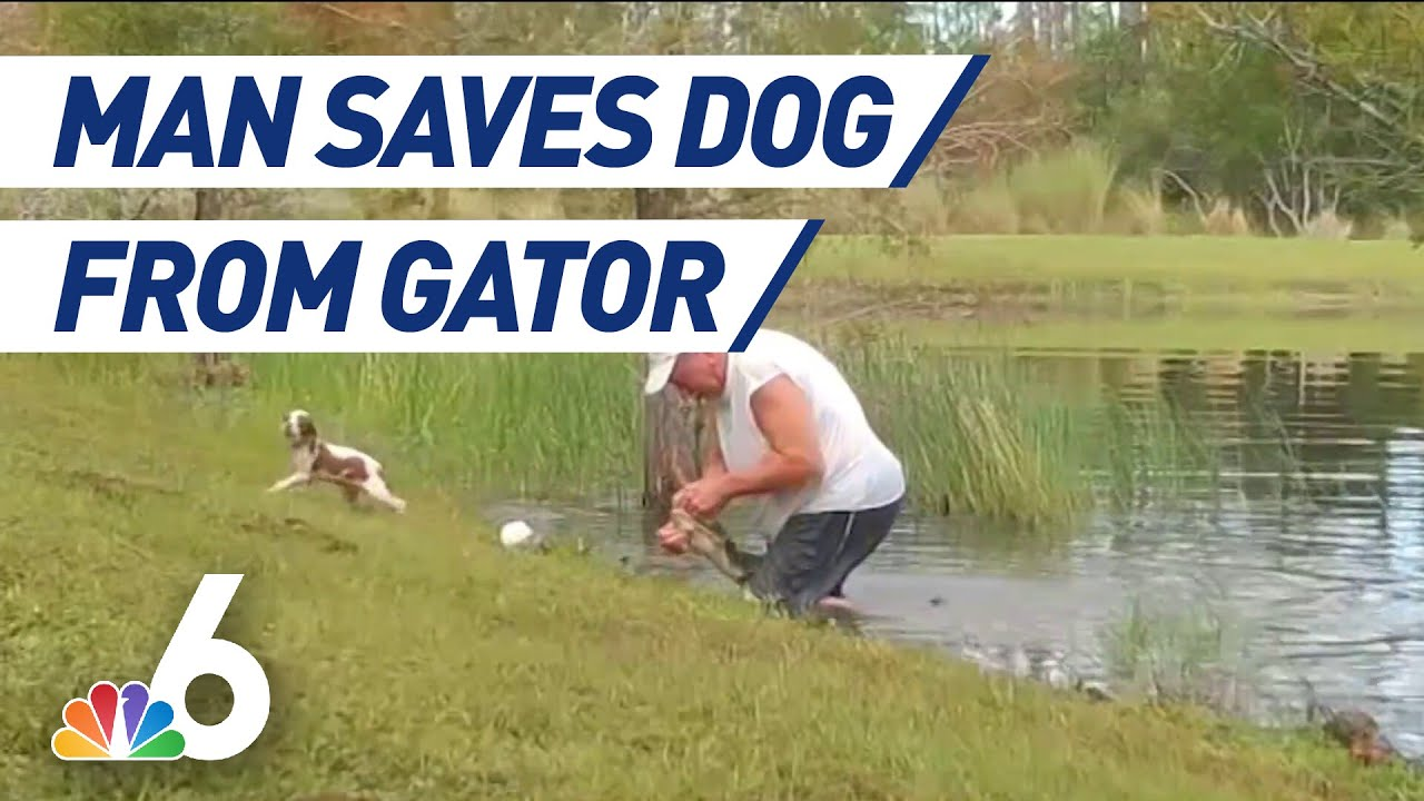 Man Saves Pet Dog From Gator Attack in Florida Pond