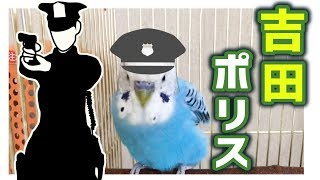再生リスト『うめのお喋り Talking budgie』↓ https://www.youtube.com/...