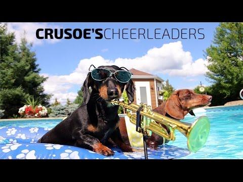 'Crusoe's Cheerleaders' - Dachshund Pool Party Music Video