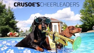 """crusoe's Cheerleaders"" - Dachshund Pool Party Music Video"