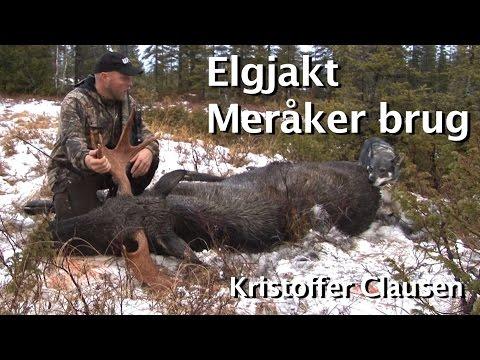 Elgjakt Med Løshund. Elgjakt Meråker Brug Med Kristoffer Clausen. Hunting Moose.