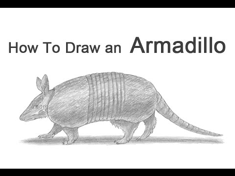 how to draw an armadillo # 3