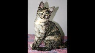 Возьмите котенка в добрые руки бесплатно в Москве
