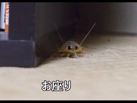 きもかわいい? 室内に謎の生物現る!!!