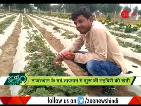 Apki News: Software engineer quits job to start strawberry farming